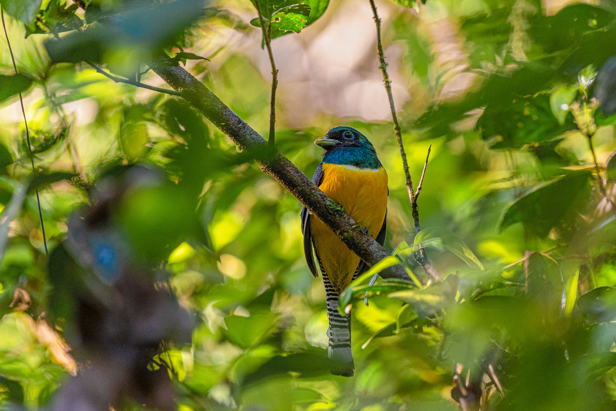 Bird life in the jungles of Costa Rica is amazing. I am a photographer not a twitcher but I was still in thrall of the huge number of species I managed to see.