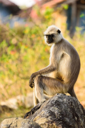 I am not a fan of anthropomorising in general but when it comes to monkeys it is so easy to see human emotions and feelings in them.