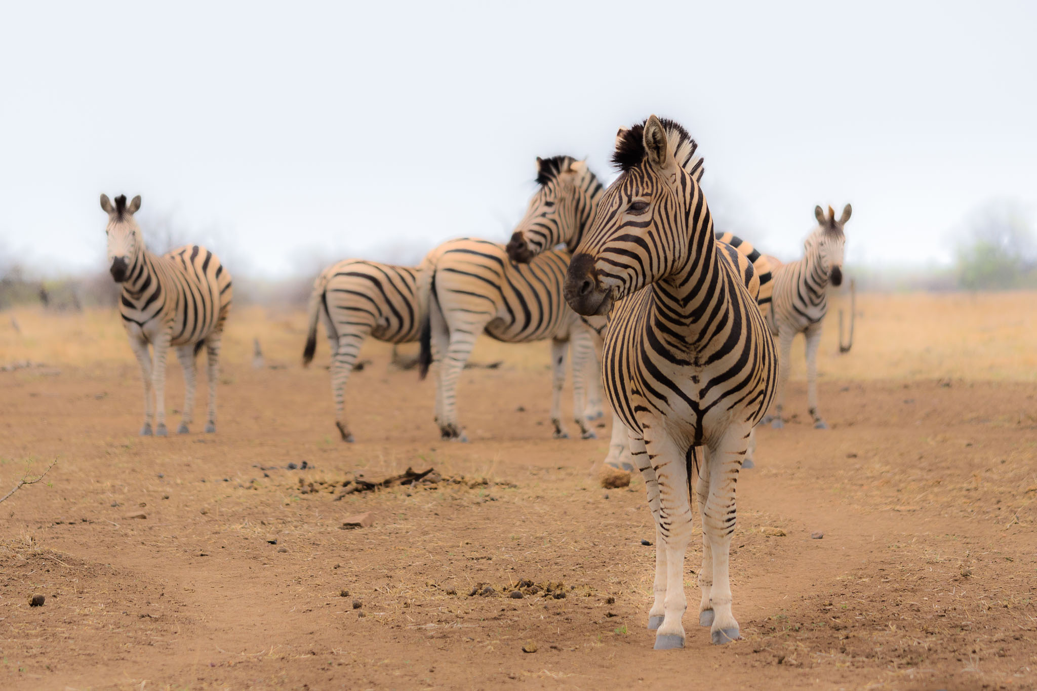 Travelling in Africa just makes everything red. It is such a dusty and red continent. The dry season makes this even worse and a herd of zebras can make quite a dust storm.