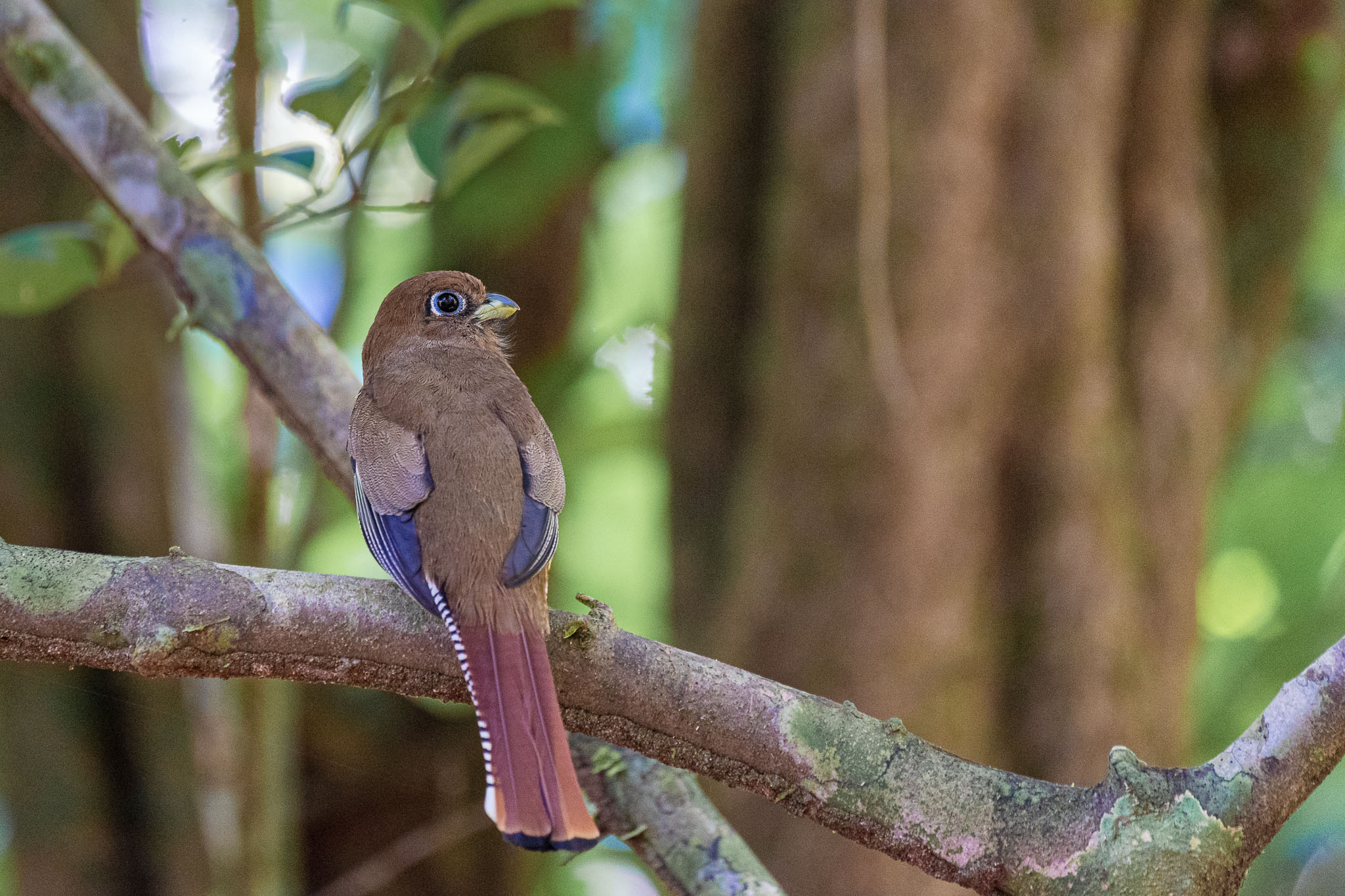 Costa Rica is a bird watcher's paradise. There are so many species and many of them are endemic. I just like to photograph the pretty ones.