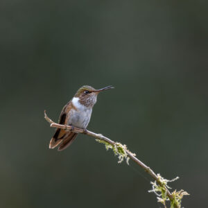 The forests of Costa Rica are full of hummingbirds. These beautiful feathered creatures are somewhat treasured by the local population and often have sugar water feeders put out for them the way we put out seeds and nuts in Europe.