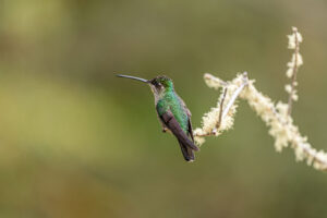 I was hoping for a photo or two of a hummingbird before going to Costa Rica. Just because the photos look effortlessly good. However I got so many that I now know they take no effort at all.