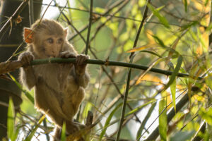 Younger monkeys aren't always sure about what is happening and just like humans look to their peers to find out what to do rather than looking straight at the strange person photographing them.