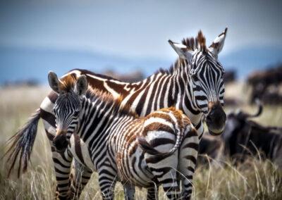 African Mammals